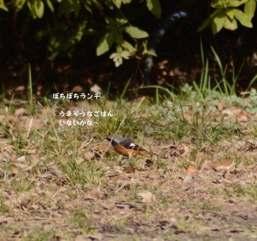 DSC_6783.jpg