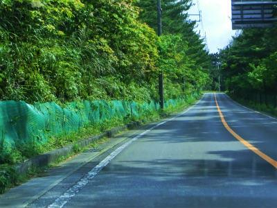緑色のネット