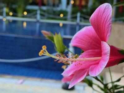 ホテルマハイナ3