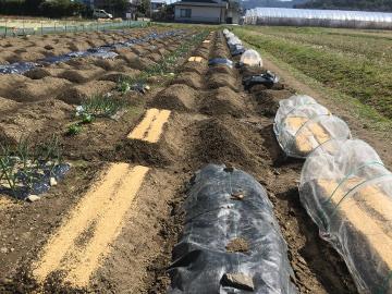 種蒔き指導と野菜いっぱい4