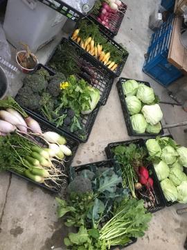 種蒔き指導と野菜いっぱい7