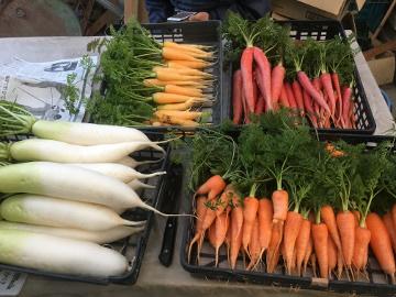 種蒔き指導と野菜いっぱい8
