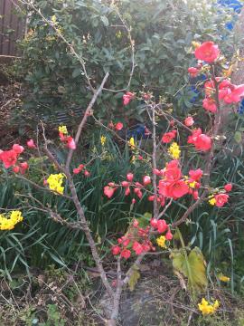 種蒔き指導と春いっぱい8