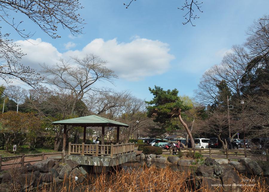 《いわき市桜情報》松ヶ岡公園のソメイヨシノ 開花までカウントダウン! [平成30年3月25日(日)更新]1