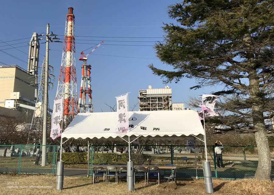 常磐共同火力(株)勿来発電所の河津桜が開花しました♪ [平成30年3月9日(金)更新]10