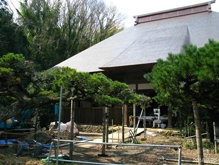 専称寺の梅が限定公開されました [平成30年3月25日(日)更新]02