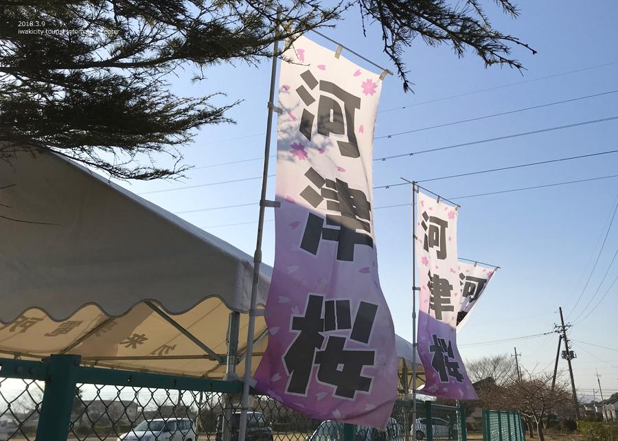 常磐共同火力(株)勿来発電所の河津桜が開花しました♪ [平成30年3月9日(金)更新]9