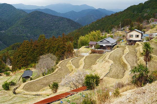熊野古道 高原霧の里の棚田