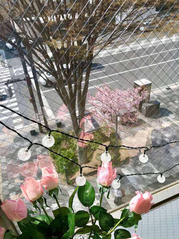 180327桜01