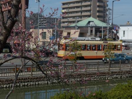 市内電車 & 椿寒桜