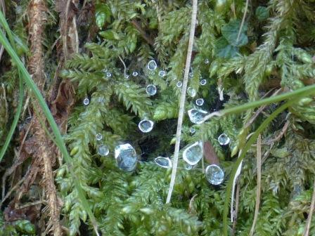 葉に付いた雫の氷