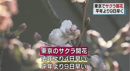 17_mar_sakura_ 1