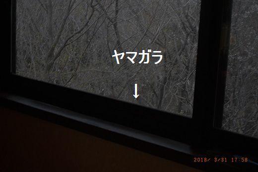 R0039992.jpg