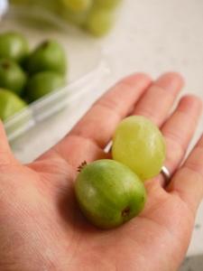 Kiwi-berry-1