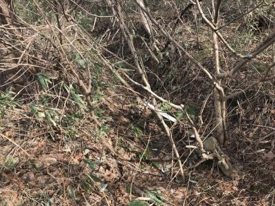 畑のすぐ東側にある、堀か水路に見える地形