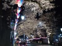 桜2018、東村山ー1