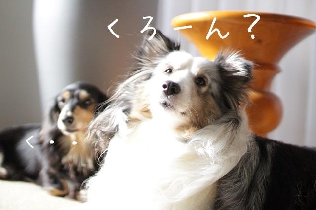 クローン犬と生まれ変わり犬