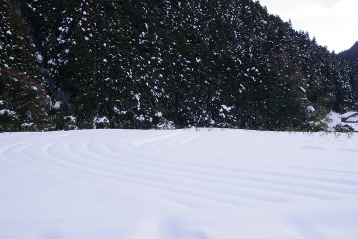 畑の雪化粧
