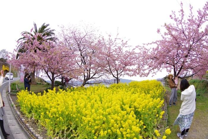 春のたわむれ