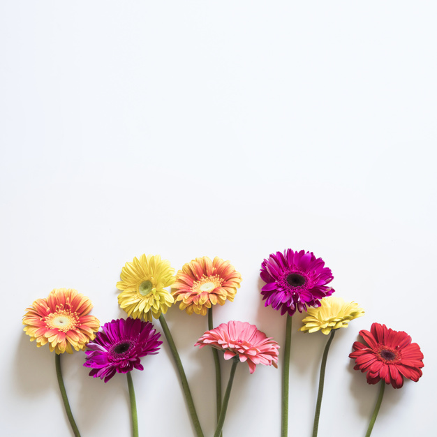 spring-concept-with-colorful-flowers_23-2147758059.jpg