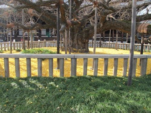東寺・本願寺 (85)