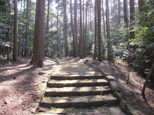 初午松阪 (66)