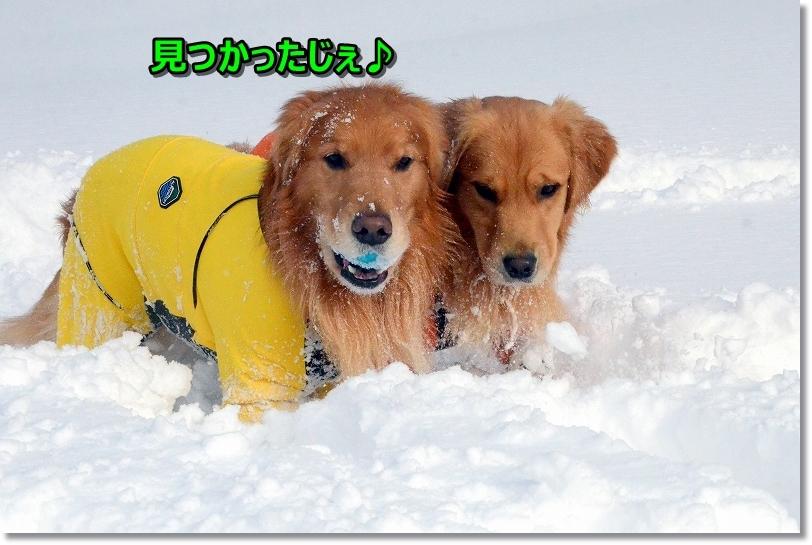 DSC_4617雪の中ではボールも楽しいらしい
