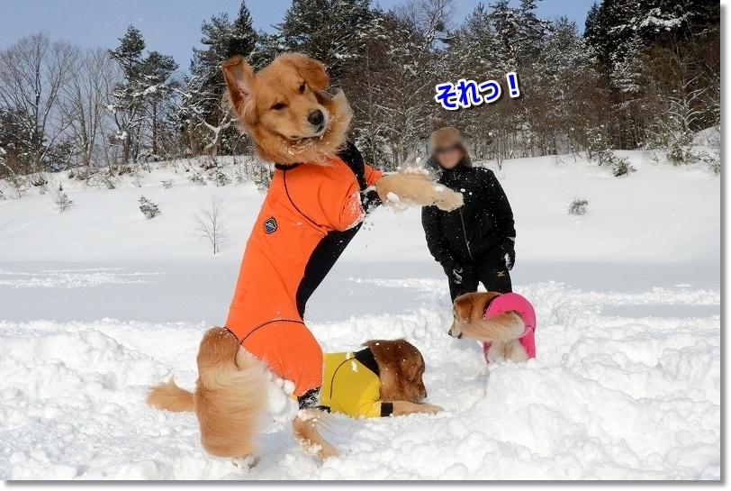 DSC_4626雪玉遊び