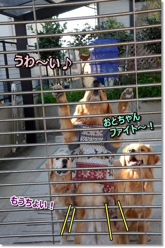 DSC_3440おとちゃんファイト!ぴょんこ
