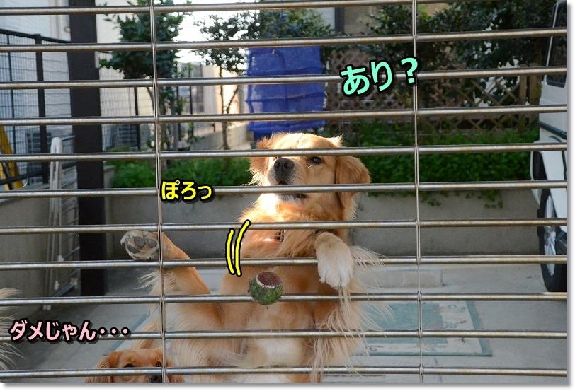 """DSC_3446あ""""~"""