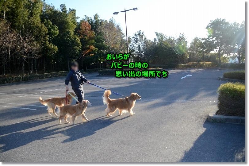 DSC_2968ここは、おいらがパピーの時毎日お散歩してたんだ