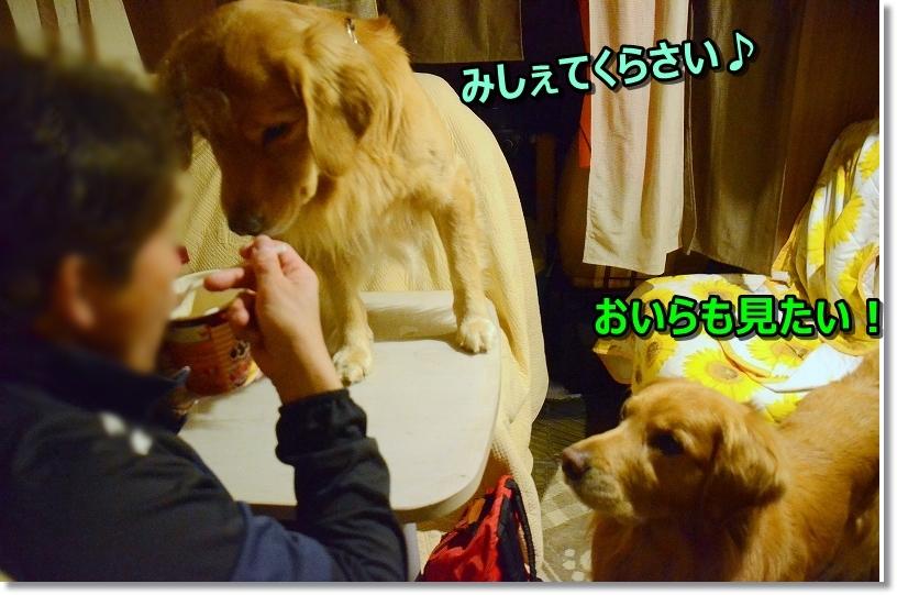 DSC_5474みしぇて~