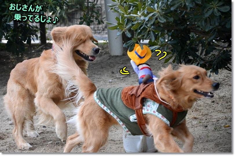 DSC_5577みしぇて~ おと分からない