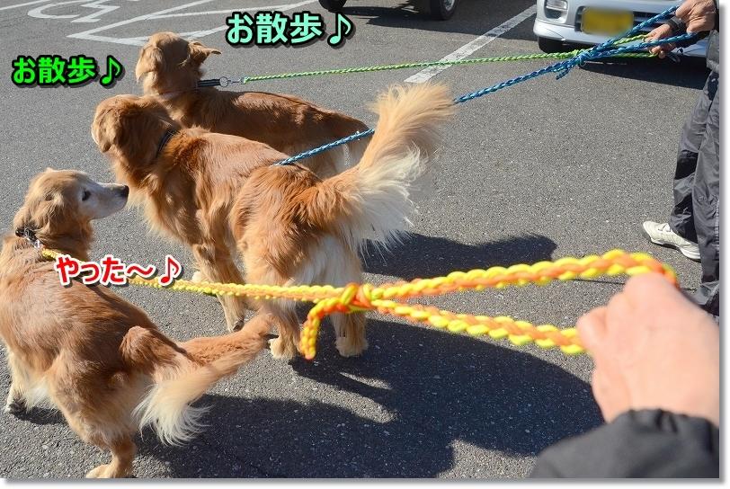 DSC_5793お散歩いくじぇ~