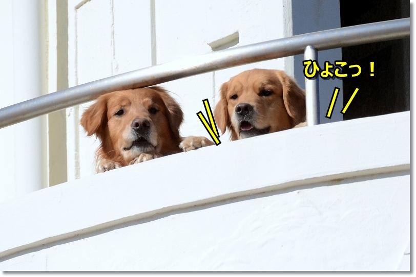DSC_5836ひょこひょこ