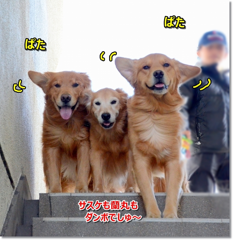 DSC_5855ダンボ蘭丸