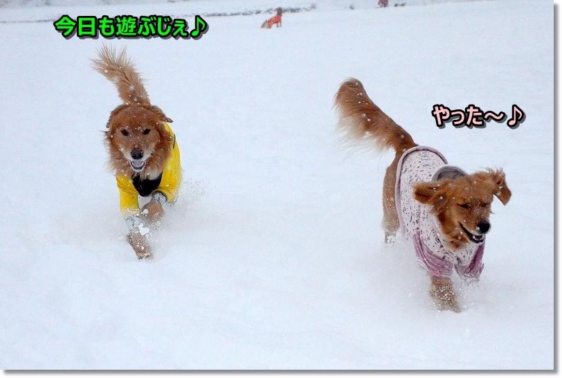 DSC_6677朝一で雪遊び♪なんて贅沢な