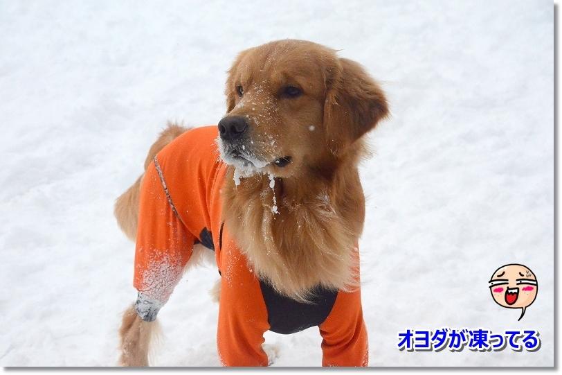 DSC_6776オヨダが凍ってる