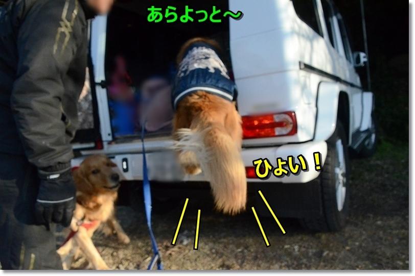 DSC_7133しゅわ