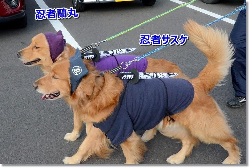 DSC_5972忍者サスケと蘭丸
