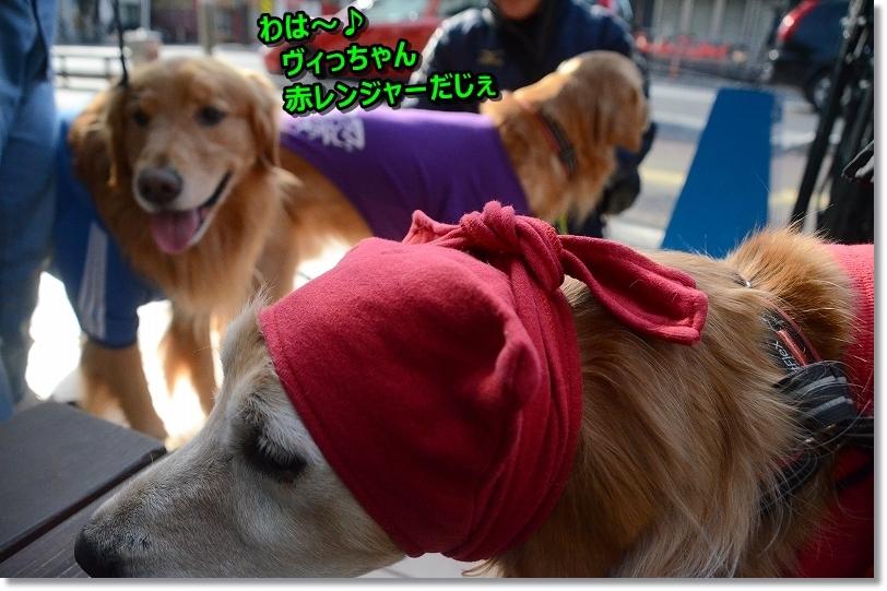 DSC_わは~ヴィっちゃん赤ずきんちゃんだ5959