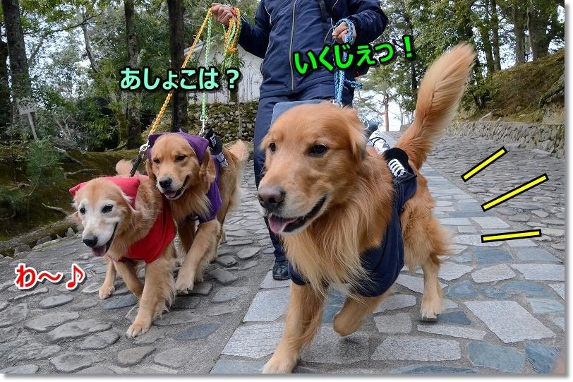 DSC_6113お茶屋ら~ ちゃ~するじぇ