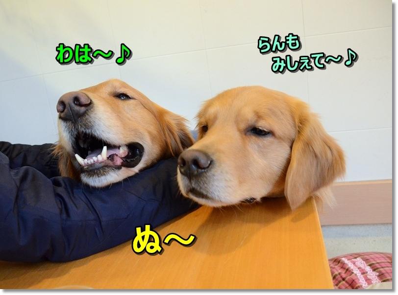 DSC_6210みしぇて~