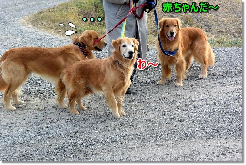 DSC_0893ワ~