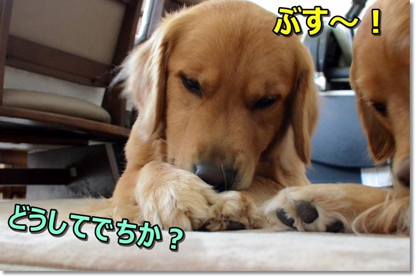 DSC_8827ぶす~