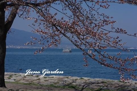 桜180327