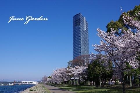桜180331