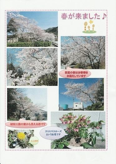春が来ました♪