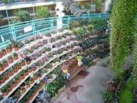2018-01-14花と泉の公園ベゴニア館165