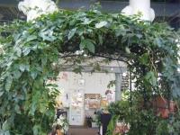 2018-01-14花と泉の公園ベゴニア館175